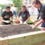 Five Levine Scholars worked together to build a community garden on UNC Charlotte's campus.